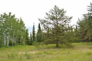 Photo 3: RR 205 TWP 574: Rural Sturgeon County Rural Land/Vacant Lot for sale : MLS®# E4150964