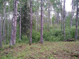 Photo 7: 32 53301 RGE RD 32 Road: Rural Parkland County Rural Land/Vacant Lot for sale : MLS®# E4134995