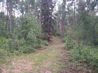 Photo 4: 32 53301 RGE RD 32 Road: Rural Parkland County Rural Land/Vacant Lot for sale : MLS®# E4134995