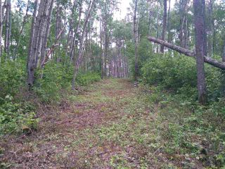 Photo 5: 32 53301 RGE RD 32 Road: Rural Parkland County Rural Land/Vacant Lot for sale : MLS®# E4134995