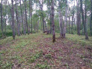Photo 6: 32 53301 RGE RD 32 Road: Rural Parkland County Rural Land/Vacant Lot for sale : MLS®# E4134995