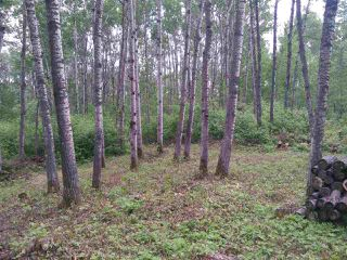 Photo 8: 32 53301 RGE RD 32 Road: Rural Parkland County Rural Land/Vacant Lot for sale : MLS®# E4134995