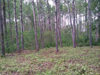 Photo 10: 32 53301 RGE RD 32 Road: Rural Parkland County Rural Land/Vacant Lot for sale : MLS®# E4134995