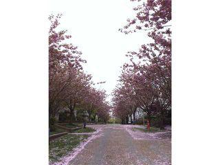 Photo 10: # 113 5900 DOVER CR in Richmond: Riverdale RI Condo for sale : MLS®# V905708
