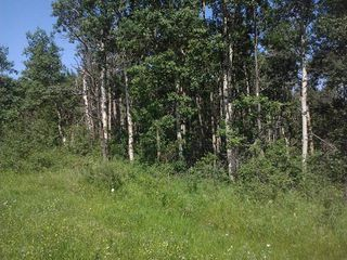 Photo 5: 16 51222 RGE RD 260 Road: Rural Parkland County Rural Land/Vacant Lot for sale : MLS®# E4191798