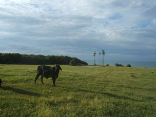 Photo 3: Las Tablas Oceanfront Land