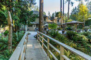 "Photo 51: 2853 138 Street in Surrey: Elgin Chantrell House for sale in ""ELGIN CHANTRELL"" (South Surrey White Rock)  : MLS®# R2329589"