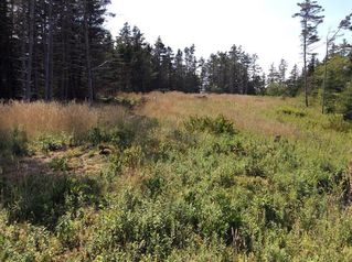 Photo 11: Oceanfront Stoney Island Highway 330 in Stoney Island: 407-Shelburne County Vacant Land for sale (South Shore)  : MLS®# 201822121