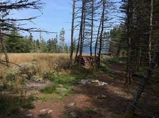 Photo 9: Oceanfront Stoney Island Highway 330 in Stoney Island: 407-Shelburne County Vacant Land for sale (South Shore)  : MLS®# 201822121