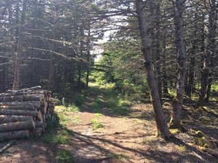 Photo 12: Oceanfront Stoney Island Highway 330 in Stoney Island: 407-Shelburne County Vacant Land for sale (South Shore)  : MLS®# 201822121