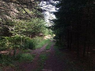 Photo 13: Oceanfront Stoney Island Highway 330 in Stoney Island: 407-Shelburne County Vacant Land for sale (South Shore)  : MLS®# 201822121