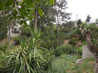 Photo 3: HILLCREST House for sale : 4 bedrooms : 1409 Brookes Ave in San Diego