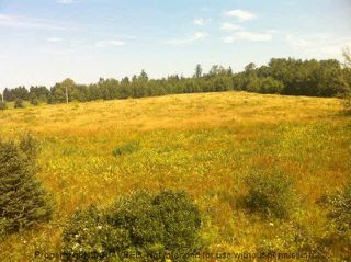 Photo 5: 8+/- ACRES NO 6 HIGHWAY in Toney River: 108-Rural Pictou County Vacant Land for sale (Northern Region)  : MLS®# 201910854
