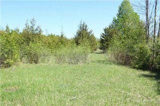 Photo 11: Pt Lt 1 Concession 13 Road in Brock: Rural Brock Property for sale : MLS®# N3143558