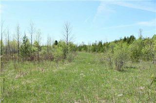 Photo 14: Pt Lt 1 Concession 13 Road in Brock: Rural Brock Property for sale : MLS®# N3143558