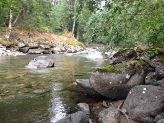 Photo 6: 19512 SILVER SKAGIT Road in Hope: Hope Silver Creek Land for sale : MLS®# R2065300
