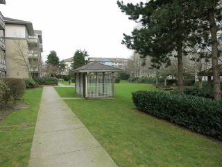 "Photo 18: 316 4990 MCGEER Street in Vancouver: Collingwood VE Condo for sale in ""CONNAUGHT"" (Vancouver East)  : MLS®# R2141317"