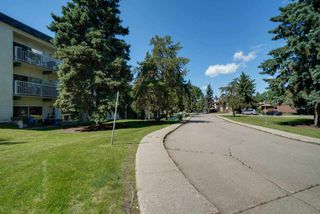 Photo 3: 119 5730 RIVERBEND Road in Edmonton: Zone 14 Condo for sale : MLS®# E4165691