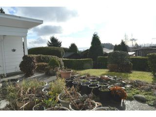 Photo 11: 1160 QUEENS Avenue in West Vancouver: British Properties House for sale : MLS®# V1102365