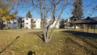 Photo 13: 6A 13220 FORT Road in Edmonton: Zone 02 Condo for sale : MLS®# E4133662