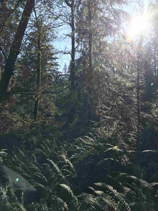 """Photo 6: BLK 51 THE GROVE Road: Gambier Island Home for sale in """"West Bay"""" (Sunshine Coast)  : MLS®# R2324691"""