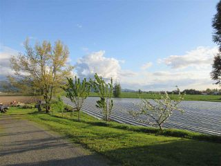 Photo 3: 38604 NO. 5 Road in Abbotsford: Sumas Prairie House for sale : MLS®# R2362035