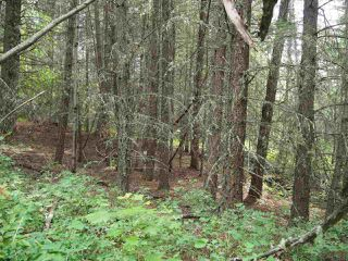 Photo 2: LOT 24 ROSE Drive: 150 Mile House Land for sale (Williams Lake (Zone 27))  : MLS®# R2285204