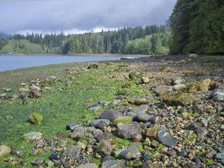 Photo 6: LT 9 & 10 Hecate Cove in QUATSINO: NI Port Hardy Land for sale (North Island)  : MLS®# 804330