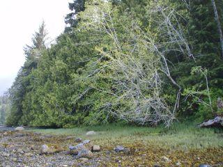 Photo 7: LT 9 & 10 Hecate Cove in QUATSINO: NI Port Hardy Land for sale (North Island)  : MLS®# 804330