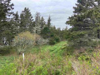 Photo 8: 1455 Highway 7 in Marie Joseph: 303-Guysborough County Vacant Land for sale (Highland Region)  : MLS®# 202010344
