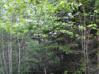 Photo 4: Lot 1 CHESTNUT Road in West Dublin: 405-Lunenburg County Vacant Land for sale (South Shore)  : MLS®# 201611199