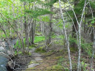 Photo 2: Lot 1 CHESTNUT Road in West Dublin: 405-Lunenburg County Vacant Land for sale (South Shore)  : MLS®# 201611199