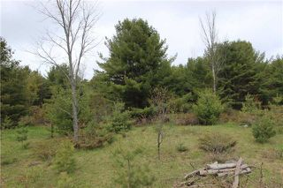 Photo 8: Lt 22 Maritime Road in Kawartha Lakes: Rural Bexley Property for sale : MLS®# X3793246