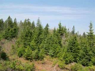 Photo 6: 3 lots Highway 331 in Dublin Shore: 405-Lunenburg County Vacant Land for sale (South Shore)  : MLS®# 201712817