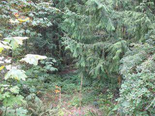 Main Photo: LOT 5 HENDERSON AVENUE: Roberts Creek Home for sale (Sunshine Coast)  : MLS®# V1139795