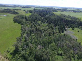 Photo 16: Twp Rd 470 Rge Rd 244: Rural Wetaskiwin County Rural Land/Vacant Lot for sale : MLS®# E4145125