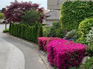 """Photo 16: 5495 WEST VISTA Court in West Vancouver: Upper Caulfeild House for sale in """"UPPER CAULFEILD"""" : MLS®# R2376680"""