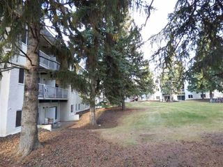 Photo 4: 305 5730 RIVERBEND Road in Edmonton: Zone 14 Condo for sale : MLS®# E4198995