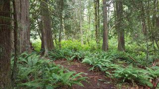 "Photo 8: 14.65AC BARRETT STREET in Mission: Mission BC Land for sale in ""Silverhill"" : MLS®# R2079511"