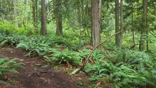 "Photo 7: 14.65AC BARRETT STREET in Mission: Mission BC Land for sale in ""Silverhill"" : MLS®# R2079511"