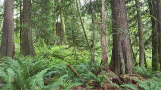 "Photo 11: 14.65AC BARRETT STREET in Mission: Mission BC Land for sale in ""Silverhill"" : MLS®# R2079511"