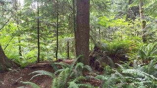 "Photo 9: 14.65AC BARRETT STREET in Mission: Mission BC Land for sale in ""Silverhill"" : MLS®# R2079511"
