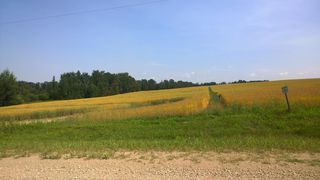 Photo 4: 51425 RGE RD 280 RD: Rural Parkland County Rural Land/Vacant Lot for sale : MLS®# E4051840