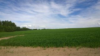 Photo 3: 51425 RGE RD 280 RD: Rural Parkland County Rural Land/Vacant Lot for sale : MLS®# E4051840