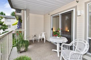 Photo 19: 216 19122 122 Avenue in Pitt Meadows: Central Meadows Condo for sale : MLS®# R2302440