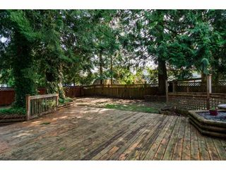 Photo 5: 20838 117 Avenue in Maple Ridge: Southwest Maple Ridge House for sale : MLS®# R2154142