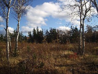 Photo 12: Lot 16 FUNDY BAY Drive in Victoria Harbour: 404-Kings County Vacant Land for sale (Annapolis Valley)  : MLS®# 201902464