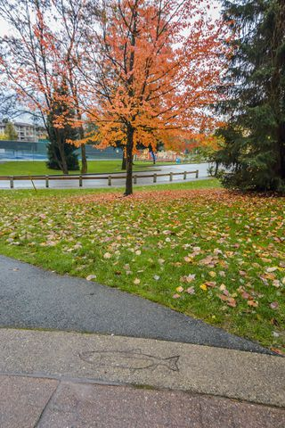 "Photo 20: 411 2495 WILSON Avenue in Port Coquitlam: Central Pt Coquitlam Condo for sale in ""Orchid Riverside Condos"" : MLS®# R2119140"