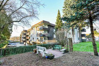 Photo 20: 111 13530 HILTON Road in Surrey: Bolivar Heights Condo for sale (North Surrey)  : MLS®# R2244455