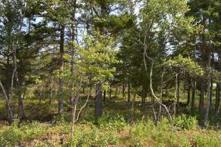 Photo 6: Lot 2 Highway 6 in Wallace: 102N-North Of Hwy 104 Vacant Land for sale (Northern Region)  : MLS®# 201913174